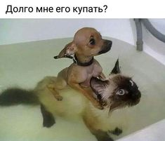 I'm dogs? Cute Funny Animals, Funny Animal Pictures, Cute Baby Animals, Funny Dogs, Animals And Pets, Cute Cats, Funny Images, Beautiful Dogs, Animals Beautiful