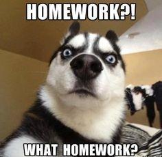 I forgot to do my homework in japanese