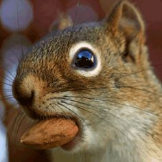 """""""I'm just a squirel trying to get a nut, so move your butt..."""""""