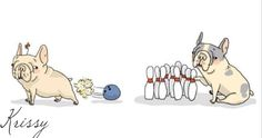 HaHaHa! French Bulldog Bowling....it's true, they do posses this Super Power.