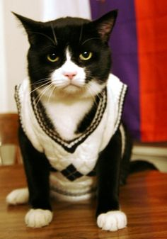 This cat really likes his sweater.