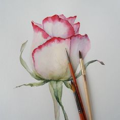Watercolor Rose watercolor watercolorpaintingfloralflowersloraYou can find Aquarell blumen and more on our website. Watercolor Rose, Watercolor Cards, Watercolor Illustration, Watercolour Painting, Painting & Drawing, Tattoo Watercolor, Watercolor Ideas, Watercolor Animals, Watercolor Landscape
