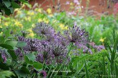 A Natural Garden by Martin Hermy (Belgium)