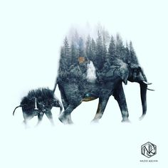 Double exposure effect  #photoshop#doubleexposure#surreal#elephants