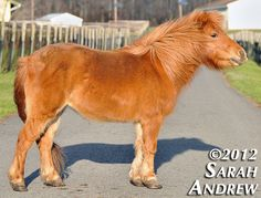 MIDGET- 13 year-old 9hh miniature horse mare- companion/pasture pet only    -----------------------------------    Midget is an excellent companion. She has foundered in the past and has some arthritis in her hips, but is doing very well these days and d http://thejobsfor13yearolds.com/summer-jobs-for-13-year-olds/  http://thejobsfor13yearolds.com/babysitting-jobs-for-13-year-olds/