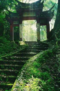 Beautiful nature and temples in Japan, I love it! Temples, Beautiful World, Beautiful Places, Beautiful Ruins, Beautiful Forest, Beautiful Pictures, Photos Voyages, Japan Travel, Asia Travel