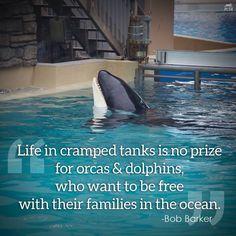 Life of a captive orca