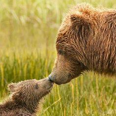 D Mom's Love