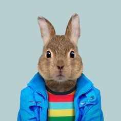 European rabbit - Zoo Portraits
