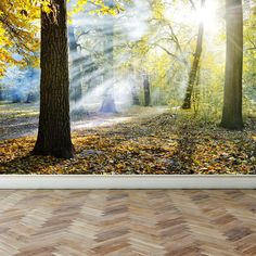 Wall Mural Sunlight in the park, Peel and Stick Repositionable Fabric Wallpaper for Interior Home Decor