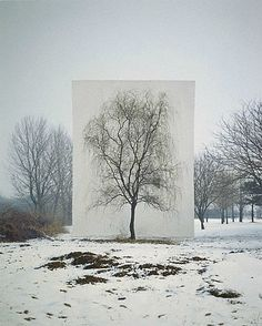 The perfect tree - I've always wanted to capture a photo of the perfect tree in each of the four seasons.....This is certainly one way to do it. Great idea (if I could draw)....