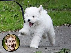 Mark Zuckerbergs's dog Beast