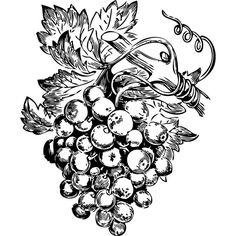 Grape Vine tattoo, with my wine key