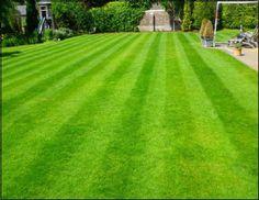 Rulo çim üretimi nasıl yapılır ?