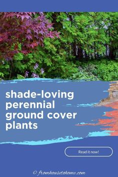 Looking for perennial ground cover plants that will thrive in your shade garden? This list of easy to grow flowering perennials is perfect for shady landscaping.