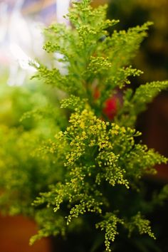 16 Inexpensive Wedding Flowers That Still Look Beautiful For Couples On A Tight Budget - the solidago!!