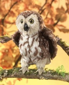 Saw-Whet Owl Hand Puppet or Saw Whet Owl by Folkmanis Puppets
