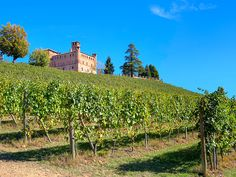 Vista del castello di Grinzane Cavour e del vigneto