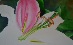 Pink Tiger Lily by Sheri Hart Whether a beginner or experienced in watercolors, you'll love painting Sheri's Pink Tiger Lily! She teaches you how to build up to the vibrant colors on the lily, adding shadows and completing it with water droplets on the petals.