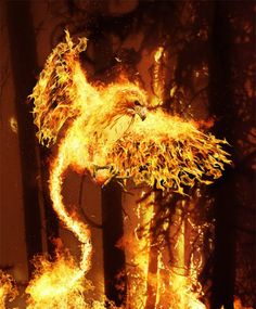 Manipulation of Fire and Flames Phoenix