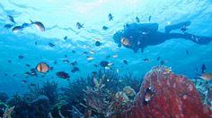 Wakatobi Tourism, Indonesia - Next Trip Tourism