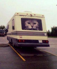 Kitty in RV Wonderland
