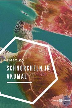Der Akumal Schnorchel Guide ✓ Wo du in Yucatan mir Meereschildkröten schnorch… Cozumel, Snorkeling, Akumal Mexico, Puerto Del Carmen, Mexico Travel, Riviera Maya, Tulum, Outdoor Travel, Things I Want