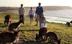 Fly to Kangaroo island and rub shoulders with local wildlife like sea lions, kangaroos or koalas
