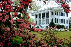 Splendor in the South