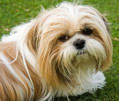 Ejercicios para perros obesos, ¡pon en forma a tu mascota!