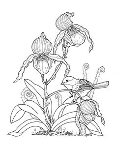 Bird And Lady Slippers Page From Southern Blooms Coloring Book