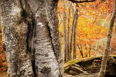 #outdoorstoryteller #karposoutdoor . Foto nel bosco di faggi in Val Germanasca. Massello