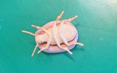 plastic bugs in clay Fossil-activity2