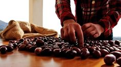 Handpicking the olives 2/2
