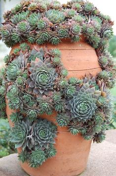 hens & chicks :) They just love living in this strawberry pot!
