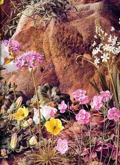 The Rock Garden ~ Raymond Booth