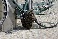 beehive under a bicycle
