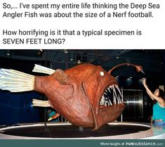 """Amusing Sh*tposts From Every Corner Of The Internet Memes) - Funny memes that """"GET IT"""" and want you to too. Get the latest funniest memes and keep up what is going on in the meme-o-sphere. Dankest Memes, Funny Memes, Funny Videos, Nemo Memes, Funniest Memes, Angler Fish, Wtf Fun Facts, Creepy Facts, Random Facts"""