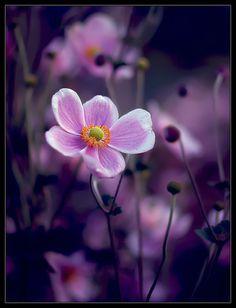 #purple flowers