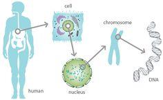 SUPERHUMANS-SECRET WORLD OF HUMAN DNA #WAVEGENETICS OF BIOLOGICAL ...