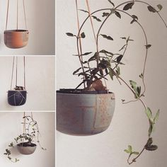 "57 Likes, 9 Comments - Arcadia Scott (@arcadia_scott) on Instagram: ""This plant is a supermodel! . . . @natureboynrth #planter #wheelthrown #ceramics #supportlocal…"""