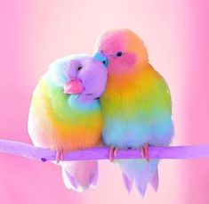 Cute Little Colorful Bird Diamond Painting Funny Birds, Cute Birds, Beautiful Birds, Animals Beautiful, Baby Animals, Cute Animals, Whatsapp Dp Images, Rainbow Aesthetic, Budgies