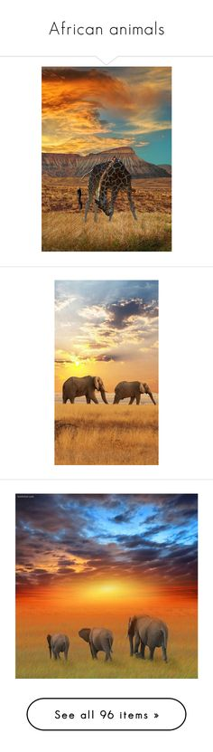 """""""African animals"""" by oleahg ❤ liked on Polyvore featuring backgrounds, animals, art, fondos, home, home decor, safari home decor, elephant home decor, africa and pictures"""