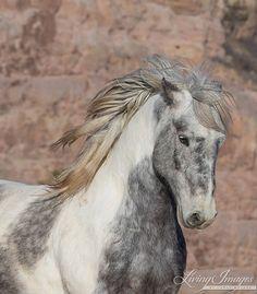 Theodore Fine Art Wild Horse Photographie von WildHoofbeats