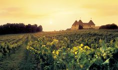 Chateau Meichtry, another family owned vineyard and winery, is located in the foothills of the Appalachian Mountains.