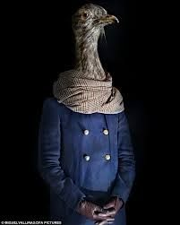 Image result for animals in clothes