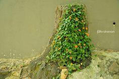 Un árbol en la pared - The tree on the wall