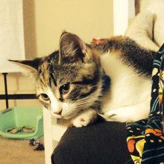 My waddle cat Quiwii (kiwi) Kiwi, Cats, Funny, Animals, Gatos, Animales, Animaux, Ha Ha, Kitty