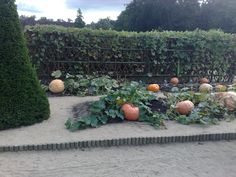 What a pumpkin patch! I aspire for mine to look a little something like this!