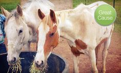 Groupon - $10 Donation to Help Feed Horses in Gresham (Sound Equine Options). Groupon deal price: $10.00